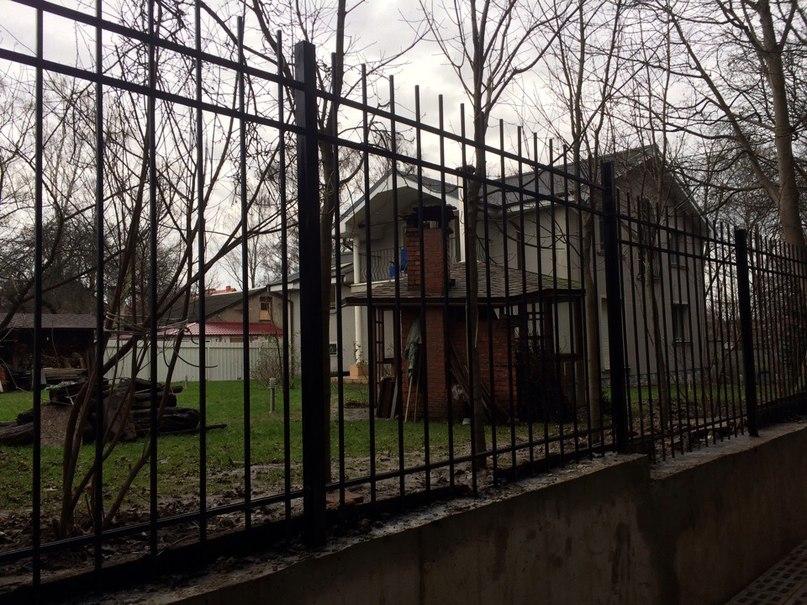61) Забор обыкновенный